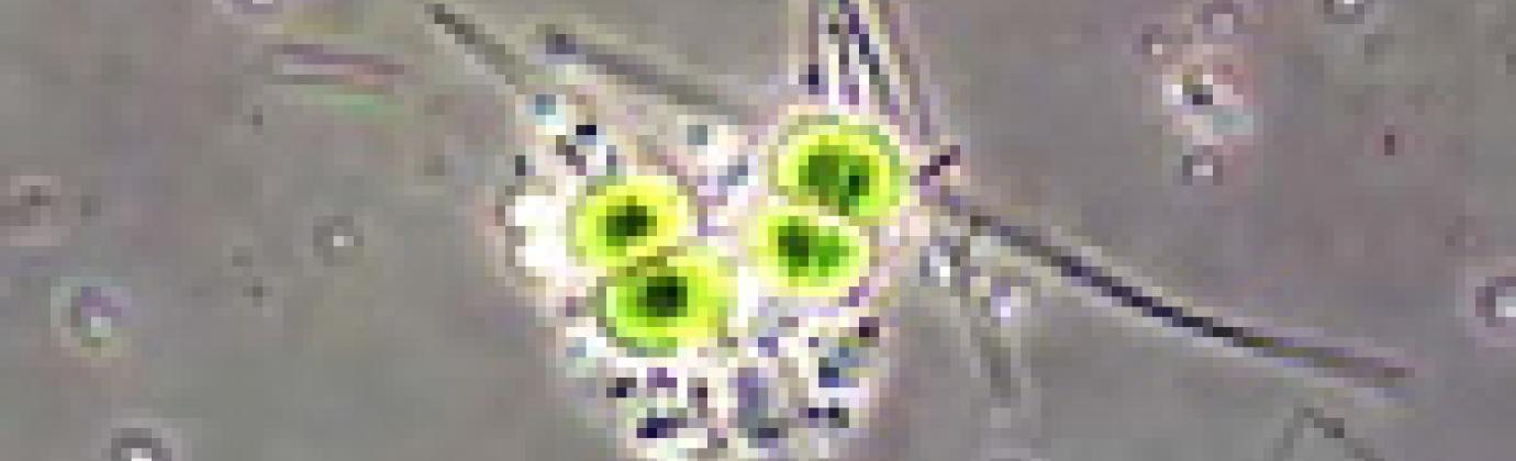 Image of Astrobiology