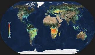 Map of the world from space highlighting burn areas.